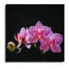Cuadro Orquídea fondo negro